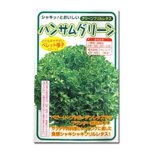 野菜の種/種子 ハンサムグリーン・グリーンフリルレタス 100粒 (メール便可能)|vg-harada