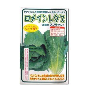野菜の種/種子 ロメインレタス・スプラッシュ 100粒 (メール便可能)|vg-harada