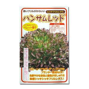 野菜の種/種子 ハンサムレッド・レッドフリルレタス 100粒 (メール便発送)|vg-harada