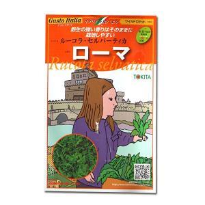 ハーブの種 ローマ・ルーコラ セルバーティカ/ワイルドロケット・イタリア野菜 500粒 (メール便可能)|vg-harada