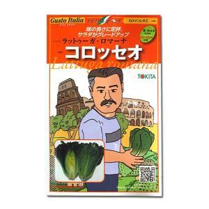 野菜の種/種子 コロッセオ・ラットゥーガ ロマーナ/ロメインレタス・イタリア野菜 80粒 (メール便可能)|vg-harada