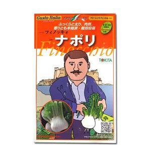野菜の種/種子 ナポリ・フィノッキォ/フローレンスフェンネル・イタリア野菜 80粒 (メール便可能)|vg-harada