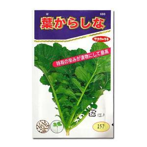 野菜の種/種子 葉からし菜 葉からしな 10ml (メール便可能)サカタのタネ|vg-harada