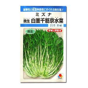 野菜の種/種子 白茎千筋京水菜 晩生・ミズナ 8ml(メール便発送)タキイ種苗|vg-harada