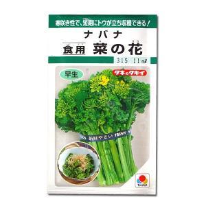 野菜の種/種子 食用 菜の花・ナバナ・菜花 5ml(メール便可能)タキイ種苗|vg-harada