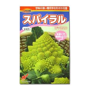 野菜の種/種子 スパイラル・ロマネスコ 30粒 (メール便可能)|vg-harada
