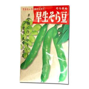 野菜の種/種子 早生そら豆 1dl (メール便可能)|vg-harada