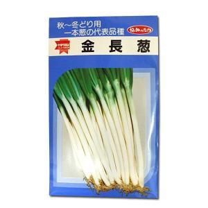 野菜の種/種子 金長葱・ねぎ ネギ 20ml (メール便発送) vg-harada