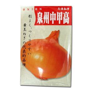 野菜の種/種子 泉州中甲高・タマネギ 20ml (メール便可能)|vg-harada