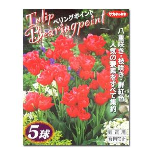 花・球根 ベリングポイント 5球入|vg-harada