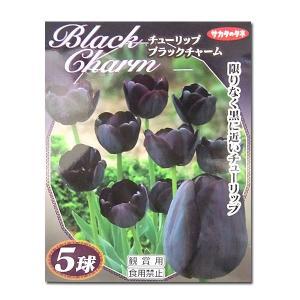 花・球根 ブラックチャーム・チューリップ 5球入|vg-harada