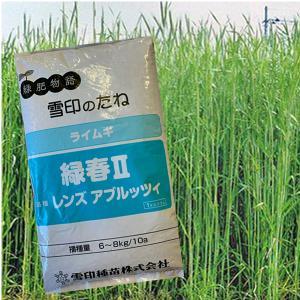 緑春・ライムギ(ライ麦)1kg 緑肥/飼料/牧草作物/種|vg-harada