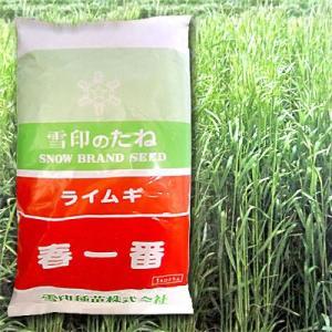 春一番・ライムギ(ライ麦)1kg 緑肥/飼料/牧草作物/種|vg-harada