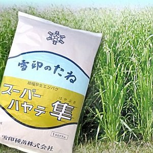 スーパーハヤテ 隼・エンバク(エン麦)1kg 緑肥/飼料/牧草作物/種|vg-harada