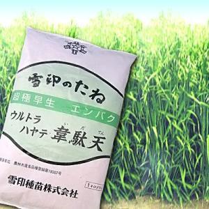 ウルトラハヤテ 韋駄天・エンバク(エン麦)1kg 緑肥/飼料/牧草作物/種|vg-harada