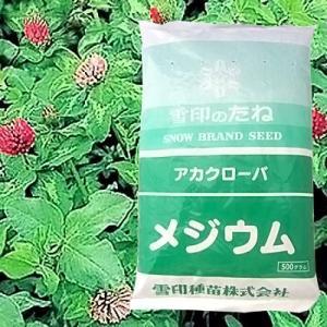 赤クローバ メジウム 500g 緑肥/飼料/牧草作物/種|vg-harada
