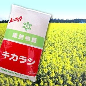 キカラシ(シロガラシ・菜の花)1kg 緑肥/飼料/牧草作物/種|vg-harada
