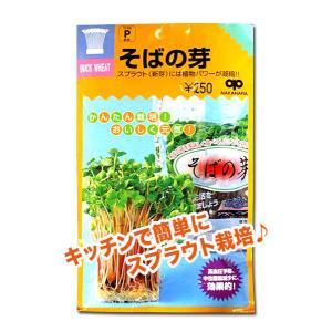 スプラウトの種 そばの芽 60ml(メール便発送)|vg-harada