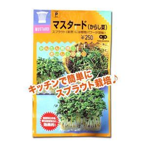 スプラウトの種 マスタード(からし菜)40ml(メール便発送)|vg-harada