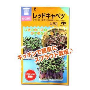 スプラウトの種 レッドキャベツ 35ml(メール便発送)|vg-harada