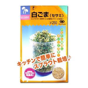 スプラウトの種 白ごま(セサミ)40ml(メール便発送)|vg-harada