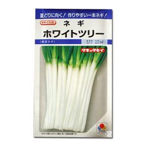 野菜の種/種子 ホワイトツリー 根深ねぎ 12ml (メール便可能)タキイ種苗|vg-harada