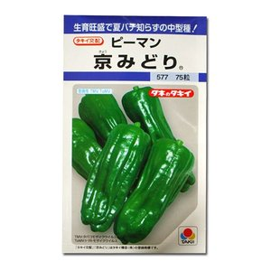 野菜の種/種子 京みどり・ピーマン 75粒(メール便可能)タキイ種苗|vg-harada