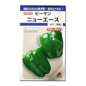 野菜の種/種子 ニューエース・ピーマン 70粒(メール便可能)タキイ種苗|vg-harada
