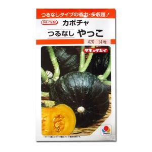 野菜の種/種子 つるなし やっこ・カボチャ かぼちゃ 南瓜 14粒 (メール便可能)タキイ種苗|vg-harada