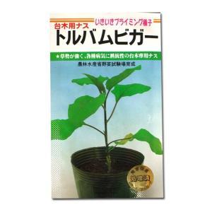 野菜の種/種子 トルバムビガー(イキイキプライミング)・台木用ナス 1000粒(メール便発送/大袋)|vg-harada