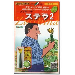 野菜の種/種子 ステラ/ズッキーニ・イタリア野菜 8粒 (メール便可能)|vg-harada