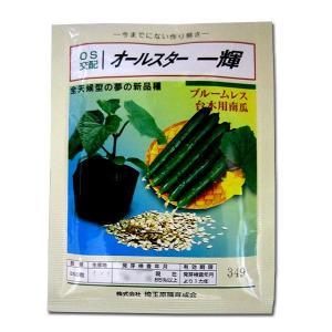 野菜の種/種子 オールスター 一輝・台木 350粒 (メール便発送/大袋)|vg-harada