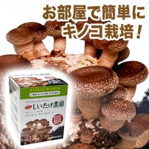 お部屋で簡単にキノコ栽培![もりの しいたけ農園]シイタケ きのこ・栽培セット