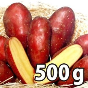 野菜・種/苗[春じゃがいも種芋]シェリー じゃがいも種芋・生もの種 量り売り500g