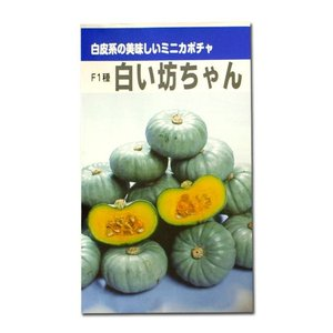 野菜の種/種子 F1種 白い坊ちゃん・かぼちゃ カボチャ (春・夏・冬)6粒 (メール便可能)|vg-harada