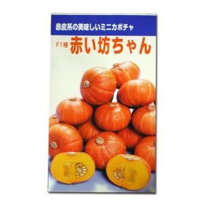 野菜の種/種子 F1種 赤い坊ちゃん・かぼちゃ カボチャ (春・夏・冬)6粒 (メール便可能)|vg-harada