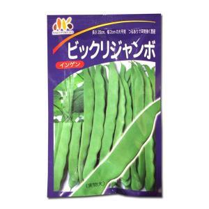 野菜の種/種子 ビックリジャンボ・いんげん 30ml (メール便発送)|vg-harada