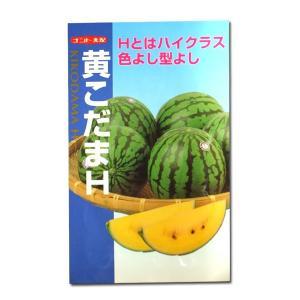 野菜の種/種子 黄こだまH・スイカ 8粒 (メール便可能)|vg-harada