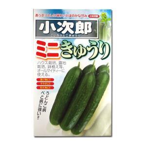 野菜の種/種子 小次郎 ミニきゅうり 10粒 (メール便可能)|vg-harada