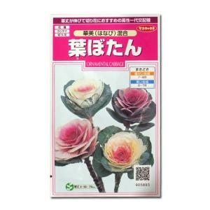 花の種 葉ぼたん[華美混合/はなび混合] 0.3ml(メール便可能)|vg-harada