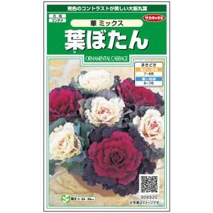花の種 葉ぼたん[傘 混合] 0.3ml(メール便発送)|vg-harada