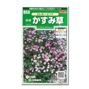 花の種 宿根 かすみ草[ピレネー ピンク] 0.1ml(メール便発送)|vg-harada