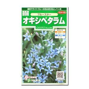 花の種 オキシペタラム[ブルースター] 0.5ml(メール便可能)|vg-harada