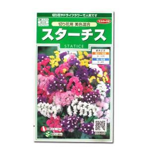花の種 スターチス[切り花用 美色混合] 0.3ml(メール便可能)|vg-harada