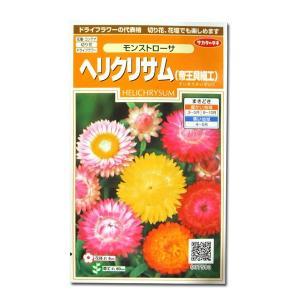 花の種 ヘリクリサム/帝王貝細工[モンストローサ] 0.8ml(メール便可能)|vg-harada