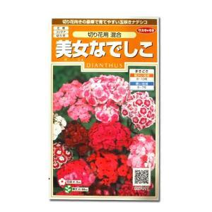 花の種 美女なでしこ[切り花用 混合] 0.5ml(メール便発送)|vg-harada
