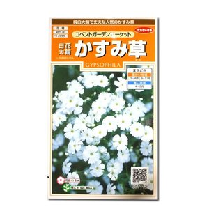 花の種 白花 大輪 かすみ草[コンベントガーデンマーケット] 1ml(メール便可能)|vg-harada