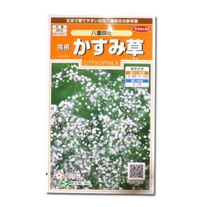 花の種 宿根 かすみ草[八重咲き] 0.2ml(メール便可能)|vg-harada