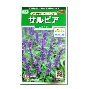 花の種 サルビア[ファリナセア ビクトリア ブルー] 0.2ml(メール便発送)|vg-harada