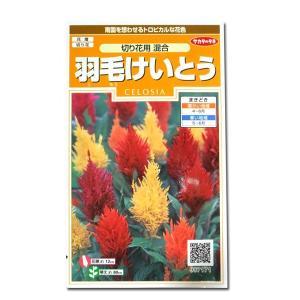 花の種 羽毛けいとう[切り花 混合] 0.3ml(メール便可能)|vg-harada